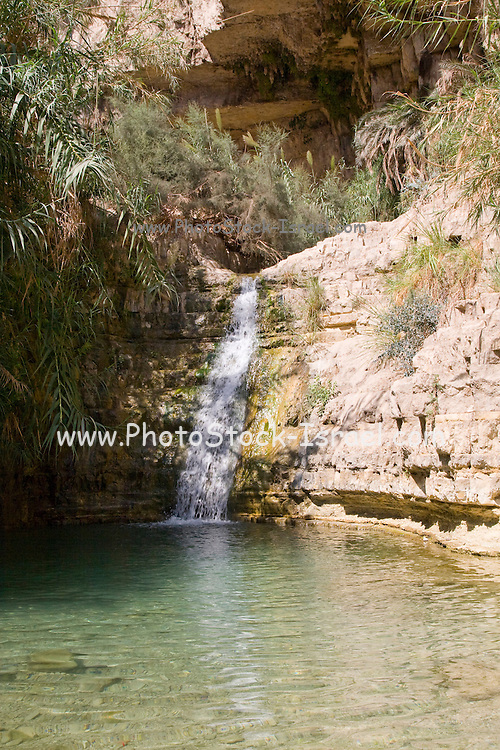 Israel, Dead Sea Ein Gedi national park the lower waterfall