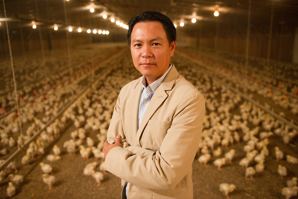 Poultry farmer with chicks