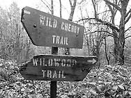 Along the 30 mile Wildwood Trail.<br /> © Tim LaBarge 2015