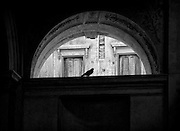 A bird silhouetted in the arch of an ancient building in Venice Italy.