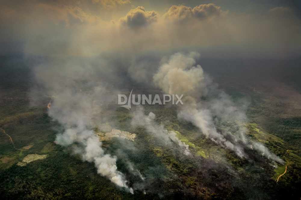 Forest fires smoulder across East Kalimantan. In 1997/98 the province lost 11.7 million hectares of forest to the largest fires in human history. Lowland Dipterocarp forests can take 200 years to recover their intricate structure -- if given a chance to take root.