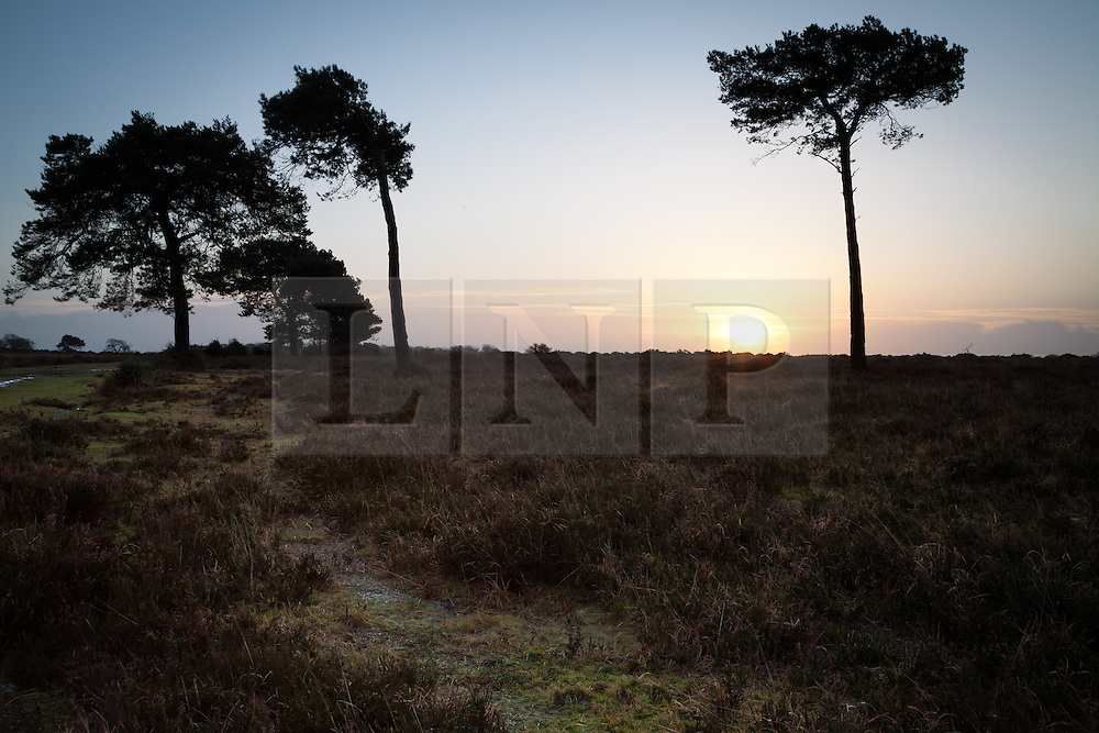 © Licensed to London News Pictures. 03/01/2014. New Forest, Hampshire, UK.  Sunrise over the New Forest in Hampshire, UK, on a day that will bring the risk of flooding to much of the south west of England. Photo credit : Rob Arnold/LNP