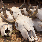 Cattle skulls for sale at the Emporium's Southwestern Outlet in Tombstone, Arizona.
