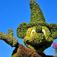 Fantasia Mickey Topiary at Future World West at Epcot in Orlando, Florida<br /> This topiary features Mickey Mouse as the young apprentice of the sorcerer, Yen Sid. (Disney spelled backwards). His attempt to clean the workshop by bringing a broom to life does not go well. This scene was one of eight in Fantasia, the animated film released by Walt Disney Productions in 1940. Few people know the story&rsquo;s origin. The Sorcerer&rsquo;s Apprentice was a poem written by Johann Wolfgang von Goethe in 1797.