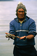 Giant Titicaca Frog (Largest aquatic frog in the World)<br />