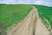 Dirt road running through green wheat fields outside Siena Tuscany Italy