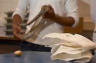 NLD, Niederlande: Besitzer hält seinen Python, nachdem ihm ein großer Harnstein, der sich fest gesetzt hatte, heraus gedrückt wurde, Universitätsklinik für Gesellschaftstiere, Fakultät der Tierheilkunde, Utrecht | NLD, Netherlands: Owner holding his python, after a large urinary calculus, which got stuck, was pressed out, university clinic for companion animals, faculty of veterinary medicine, Utrecht |