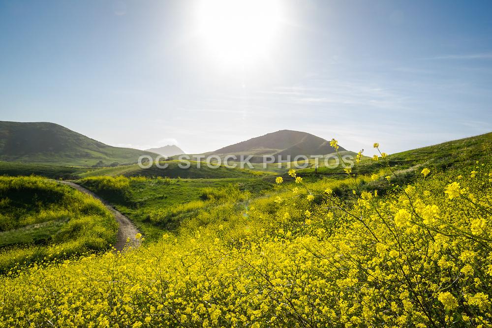 Rolling Green Hills in San Luis Obispo