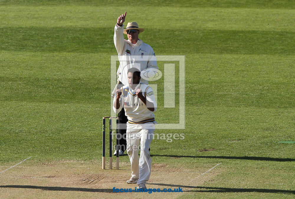 Adil Rashid (bottom) of Yorkshire County Cricket Club celebrates getting Johann Myburgh of Somerset County Cricket Club out during day 3 of the LV County Championship Div One match at the County Ground, Taunton, Taunton<br /> Picture by Tom Smith/Focus Images Ltd 07545141164<br /> 15/04/2014