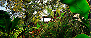 Jungle, GeeJams, Port Antonio, Panorama, Gardens, Jamaica, 2009, Travel, Tourism