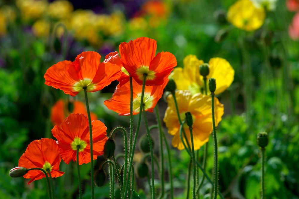 Flowers, El Prado, Balboa Park, San Diego, California, United States of America