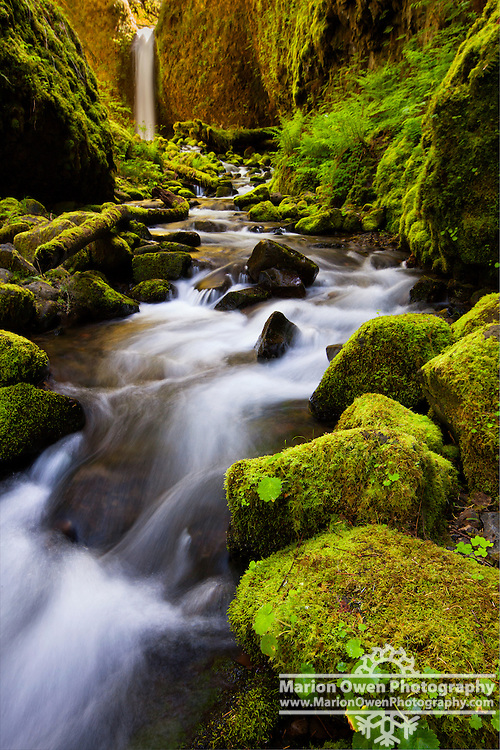 An Emerald wonderland of Mossy Grotto Falls, small, 20-foot plunging waterfall along Ruckel Creek in Hood River County, Oregon, Spring