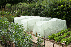 Fleece nets protecting kale