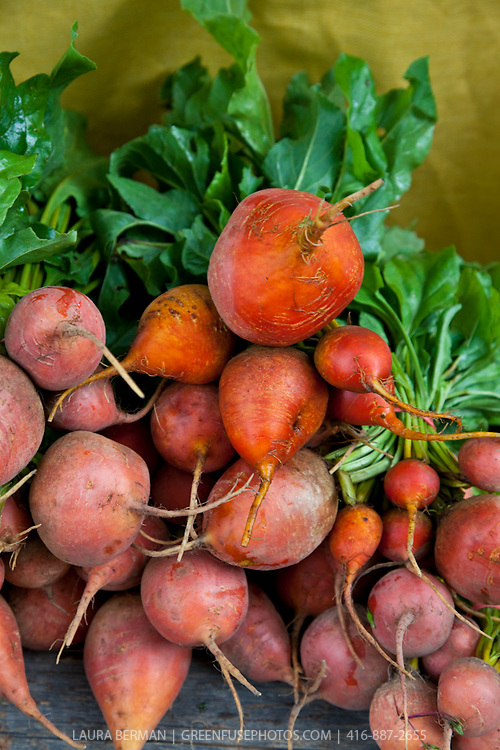 Touchstone Gold beets at a farmers market.