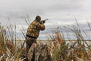 Photo No 6 of series - Hunter kills canvasback drake on open water marsh.