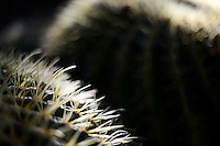SUPERIOR, AZ - March 19: Detail view of barrel cactus. (Photo by Jennifer Stewart)