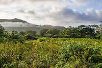 Misty dawn over the rolling landscape of Hluhluwe Game Reserve, KwaZulu Natal, South Africa