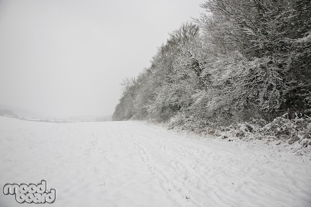 UK snowy field and forest