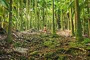 Hiker in palm forest, Onomea Bay, Hamakua Coast, The Big Island, Hawaii USA