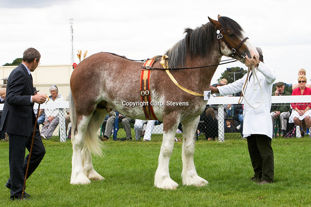 Clydesdales at The Great Yorkshire Show 2011