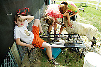 Dirk Nelson, 9, rubs his eye while sitting on a sheep shearing stand as his sisters, Erika Norlander, 16, right, and Jessica Norlander, 15, all with the Mountain Gem 4-H club, shear his lamb Monday at one of the 4-H areas at the North Idaho Fair and Rodeo.