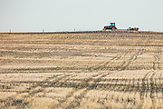 Tractor and wheat strips in northeastern Colorado near Grover, Colorado.