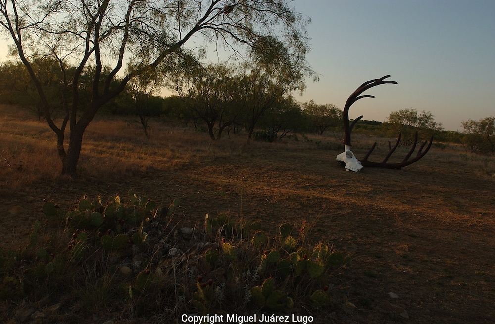 A sculpture of a deer skull in in Shackelford County, Texas. (PHOTO: MIGUEL JUAREZ LUGO).