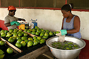Papaya processing and packing plant at Dansak Farms, Nsawam, Ghana.