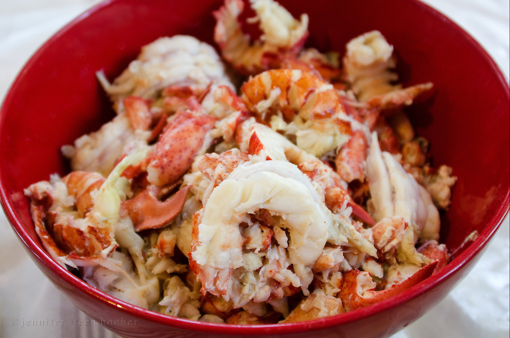 "Preparing lobster roll ingredients,: large pieces of cooked lobster in a red bowl, Bar Harbor, Maine. Removing lobster meat from the shell is called ""picking."""