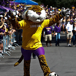 Oct 2, 2010; Baton Rouge, LA, USA; LSU Tigers mascot Mike the Tiger performs during the march down Victory Hill prior to kickoff of a game between between the LSU Tigers and the Tennessee Volunteers at Tiger Stadium.  Mandatory Credit: Derick E. Hingle