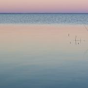 Lake Mattamuskeet, North Carolina.
