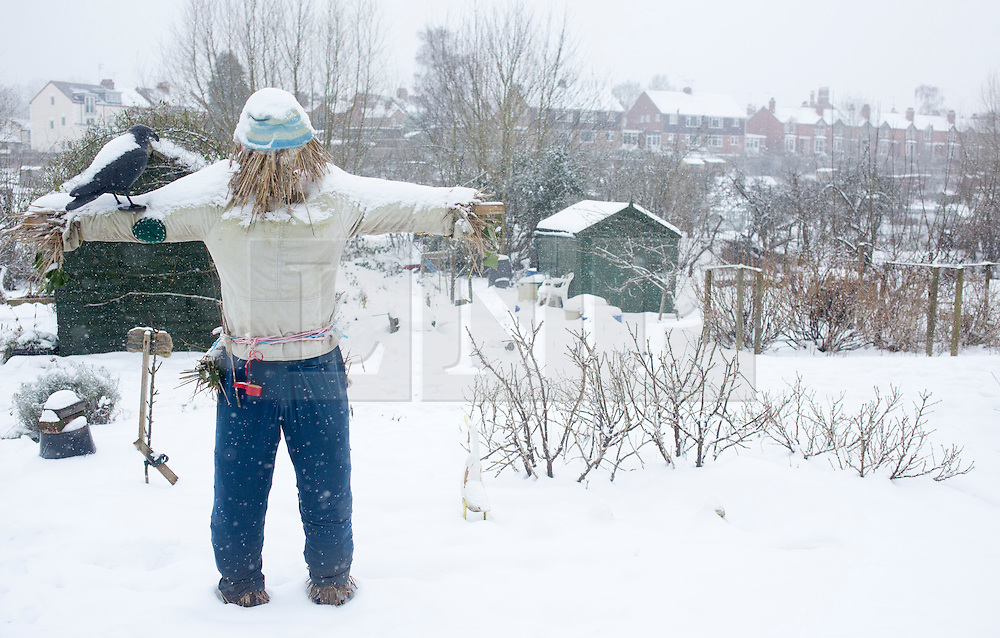 © Licensed to London News Pictures 20/01/2013.  Kenilworth, Warwickshire.   A snow covered scarecrow in an allotment in Kenilworth as snow arrives in Warwickshire again this morning on the third day of winter weather across the UK.  Photo credit : Alison Baskerville/LNP