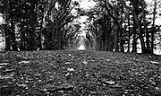 Low angle view of a tree lined dirt road.