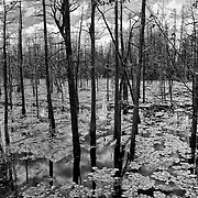 Swamp in Whiting