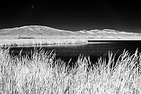 Monte Vista National Wildlife Refuge wetland; CO