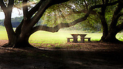 Light rays shining on a picnic table through live oak trees at the Wright Brothers National Memorial on the Outer Banks of NC.