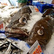 The Sydney Fish Market