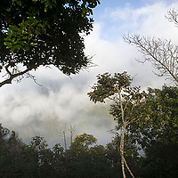 Parque Nacional El Avila, Galipán, Estado Vargas, Venezuela.