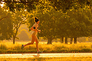 UNITED KINGDOM, London: 25 July 2019 <br /> A jogger makes her way through Richmond Park as the sun rises on what could be the hottest day ever recorded in Britain. Temperatures are set to reach up to 39 degrees Celsius later today.<br /> Rick Findler / Story Picture Agency