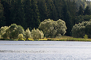 Landschaft an der Rappbodevorsperre, Trautenstein, Harz, Sachsen-Anhalt, Deutschland | landscape near lake Rappbodevorsperre, Harz, Saxony-Anhalt, Germany