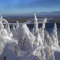 Winter landscape of frozen trees and lakes in february at Kuusamo Ruka in Finnish Lapland