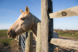 Detail of a horse on a ranch