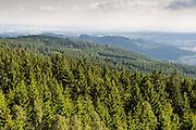 Blick über Fichtenwald auf Vorderen Bayrischen Wald, Maibrunn, Vorderer Bayerischer Wald, Bayern, Deutschland   view from tree top path in Maibrunn, Bavarian Forest, Bavaria, Germany