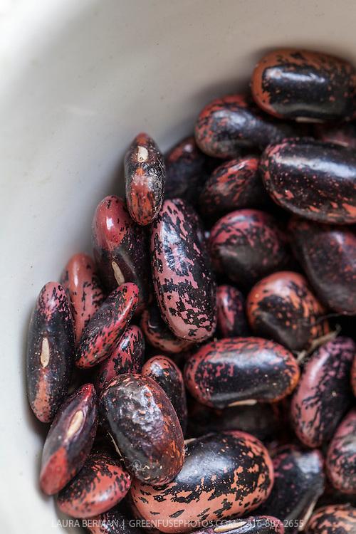 Dreid, heirloom 'Scarlet Runner' beans