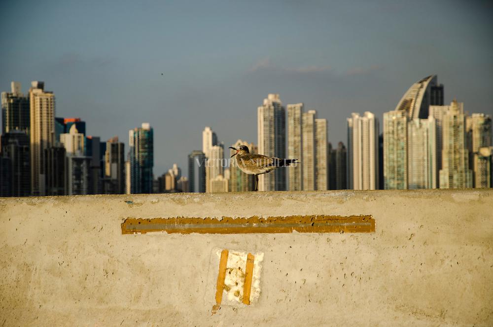 Cinta costera 3.©Victoria Murillo/Istmophoto.com