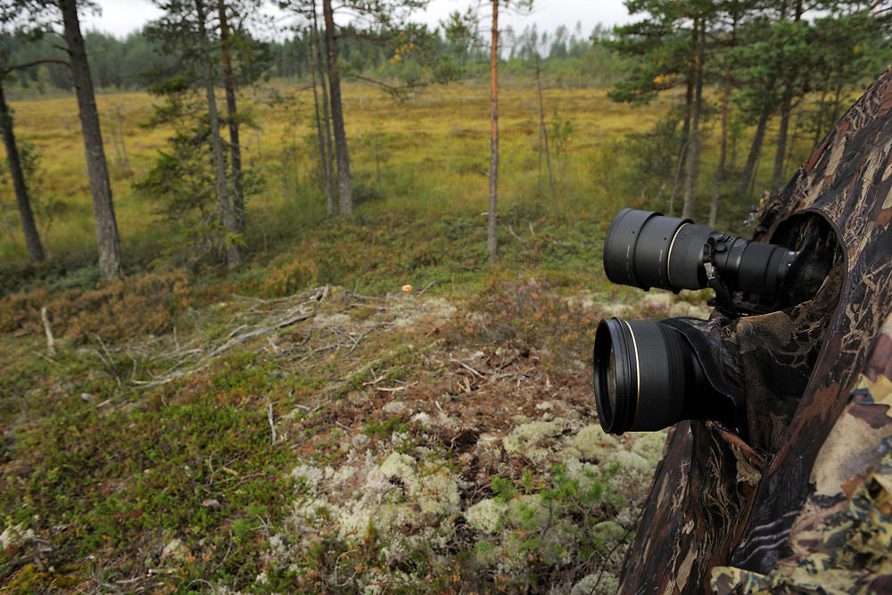 Photography hide tent, wolf-watching ecotourism, Västmanland, Sweden.