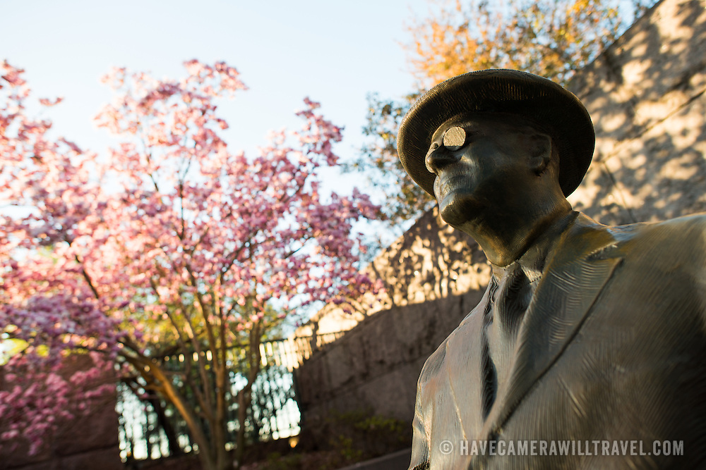 A statue of Franklin Delano Roosevelt at the FDR Memorial in Washington DC catches the early morning light, with a pnik tulip magnolia flowering in the background.
