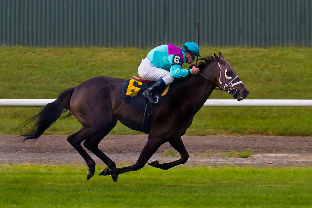 """First of three. """"Bishop of Nola"""", with Javier Castellano aboard, wins an allowance race on the grass."""
