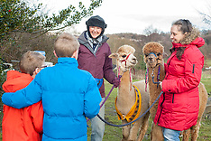 2017-12-16_Holly Hagg Alpaca Trek Sheffield