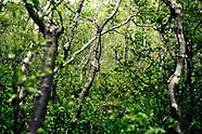 Asbyrgi greenery